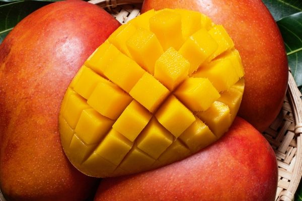 uses of mango for oily skin